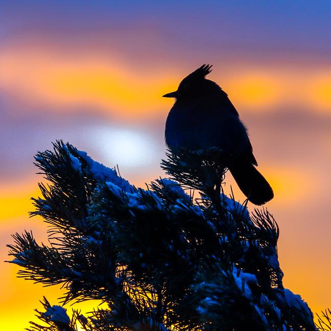Stellar Morn